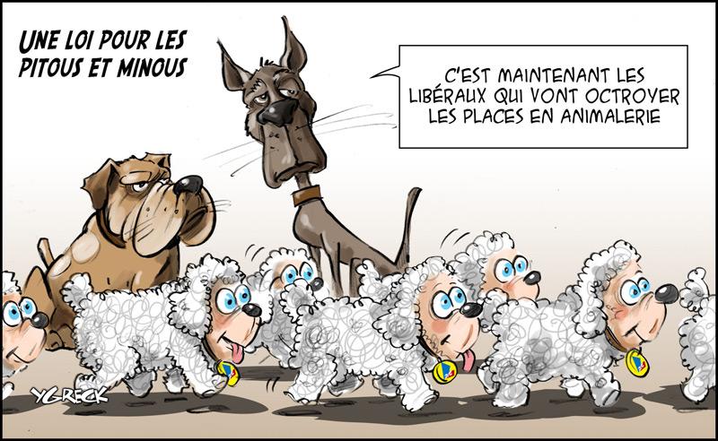 Loi-pitou