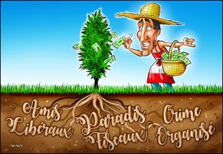 Pot-racines