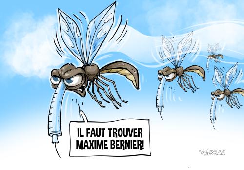 Moustique-piqueurs